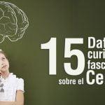 datos acerca del cerebro