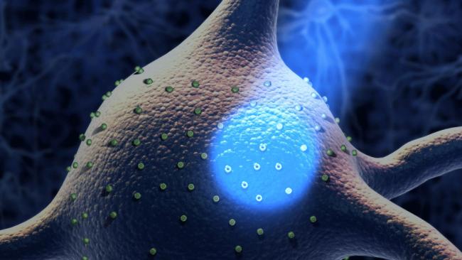 Optogenética
