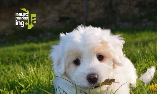 ¿Cómo influyen los anuncios con animales en la mente del comprador?