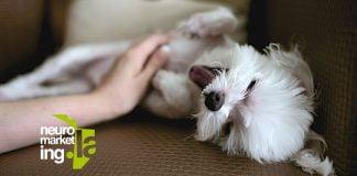 Neuromarketing en los anuncios con mascotas